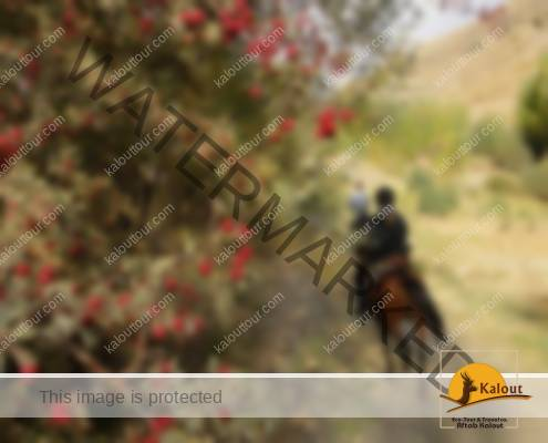 Hamedan Horse