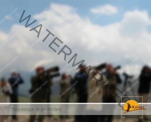 Iran-Photography-Tips