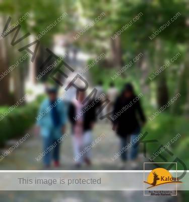 Three Women Walking in a Park in Tehran