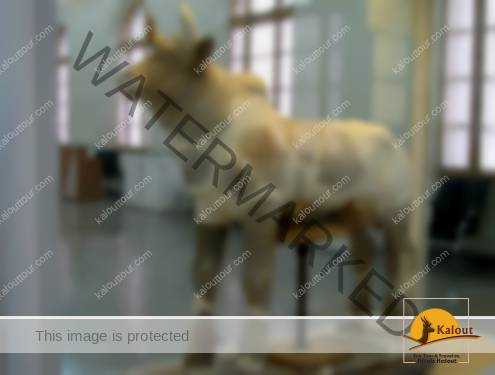 Clay-made bull from Tchogha Zanbil temple