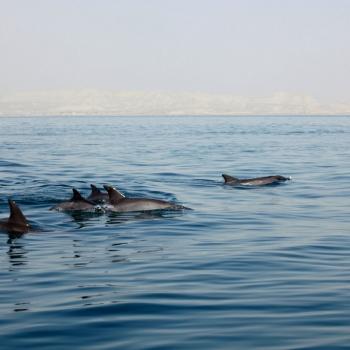 Wildlife and marine life