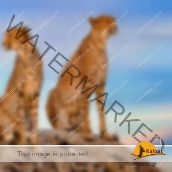 Tournée des Parcs nationaux en Iran